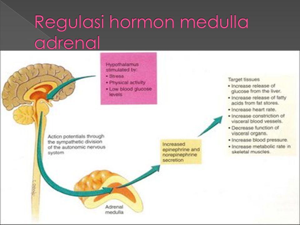 Regulasi hormon medulla adrenal