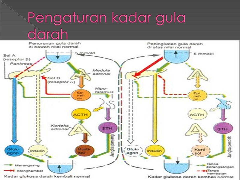 Pengaturan kadar gula darah