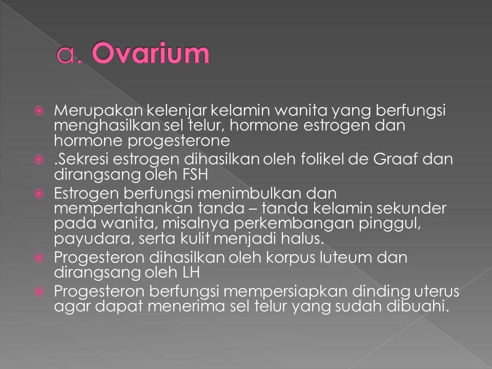 a. Ovarium Merupakan kelenjar kelamin wanita yang berfungsi menghasilkan sel telur, hormone estrogen dan hormone progesterone.