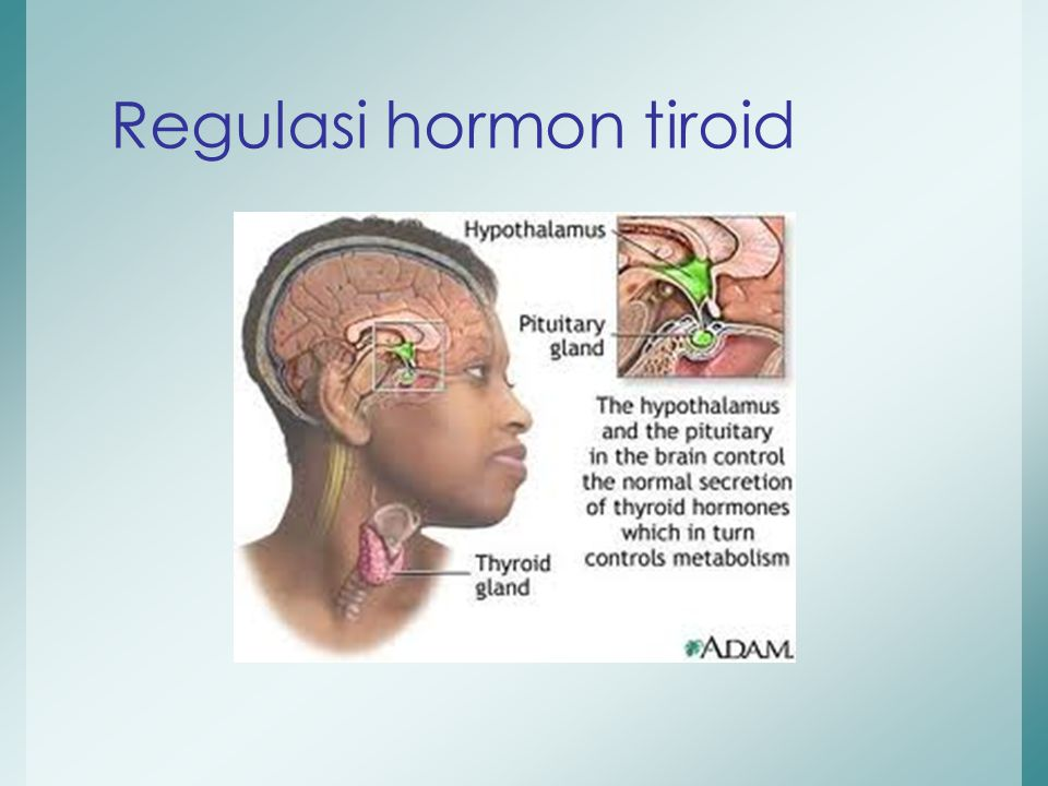 Regulasi hormon tiroid