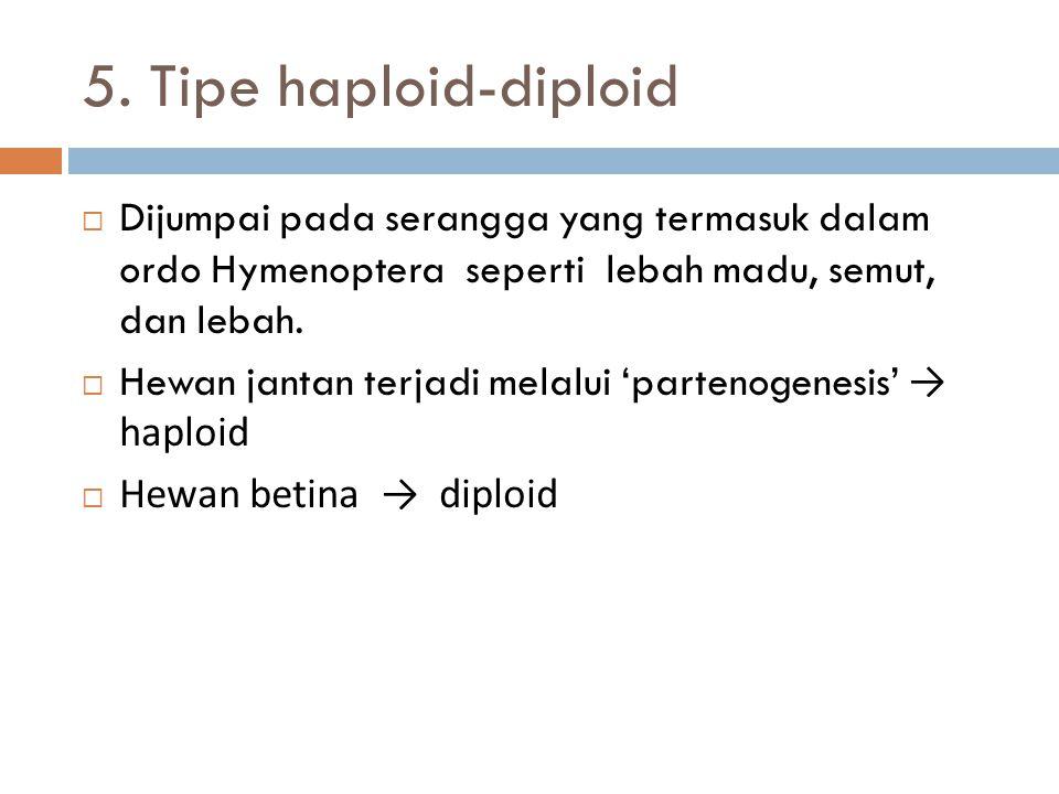5. Tipe haploid-diploid Dijumpai pada serangga yang termasuk dalam ordo Hymenoptera seperti lebah madu, semut, dan lebah.