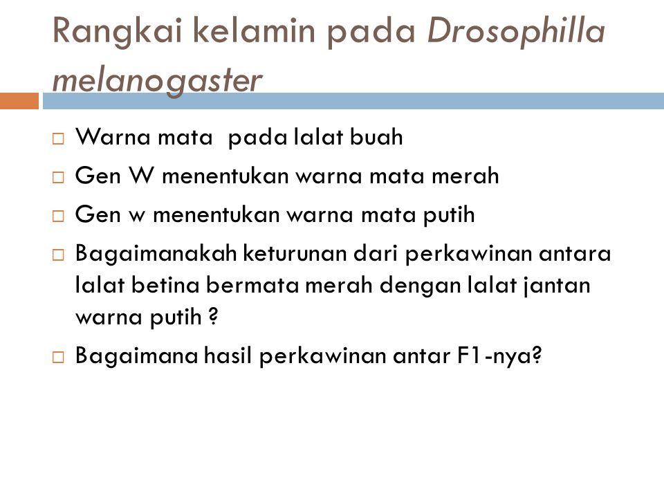 Rangkai kelamin pada Drosophilla melanogaster