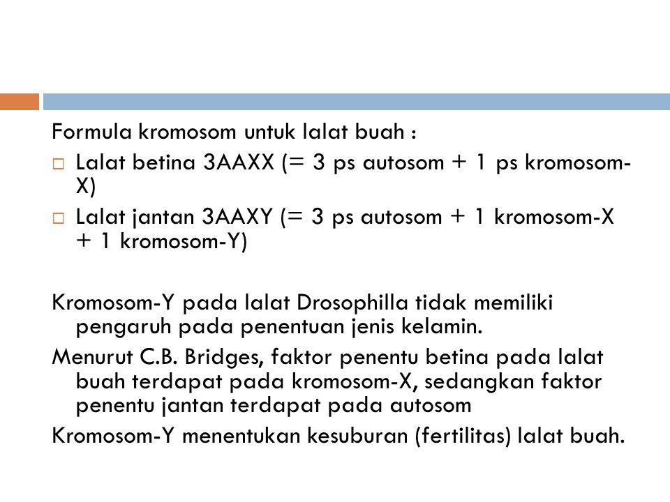 Formula kromosom untuk lalat buah :