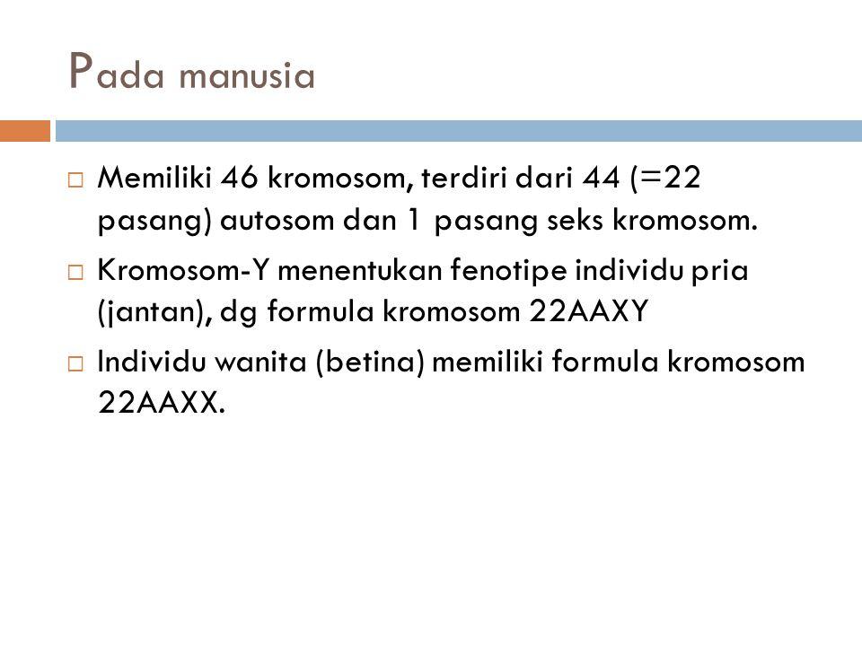 Pada manusia Memiliki 46 kromosom, terdiri dari 44 (=22 pasang) autosom dan 1 pasang seks kromosom.