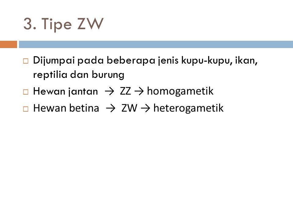 3. Tipe ZW Dijumpai pada beberapa jenis kupu-kupu, ikan, reptilia dan burung. Hewan jantan → ZZ → homogametik.
