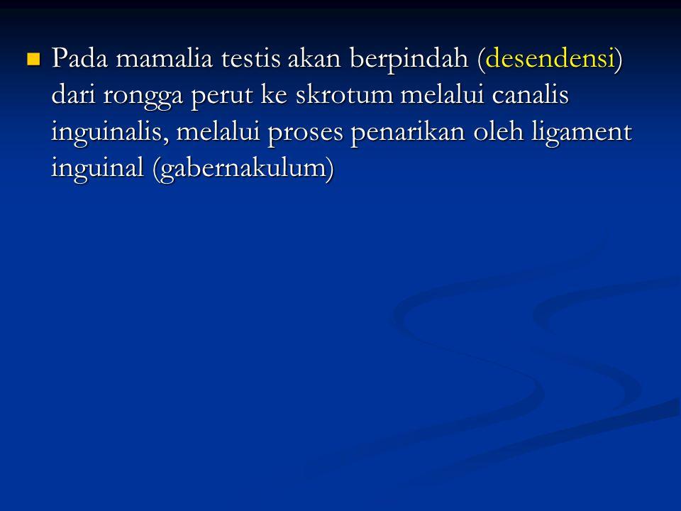 Pada mamalia testis akan berpindah (desendensi) dari rongga perut ke skrotum melalui canalis inguinalis, melalui proses penarikan oleh ligament inguinal (gabernakulum)