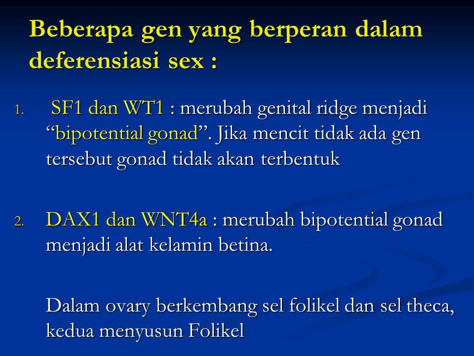 Beberapa gen yang berperan dalam deferensiasi sex :