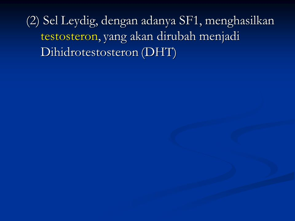 (2) Sel Leydig, dengan adanya SF1, menghasilkan