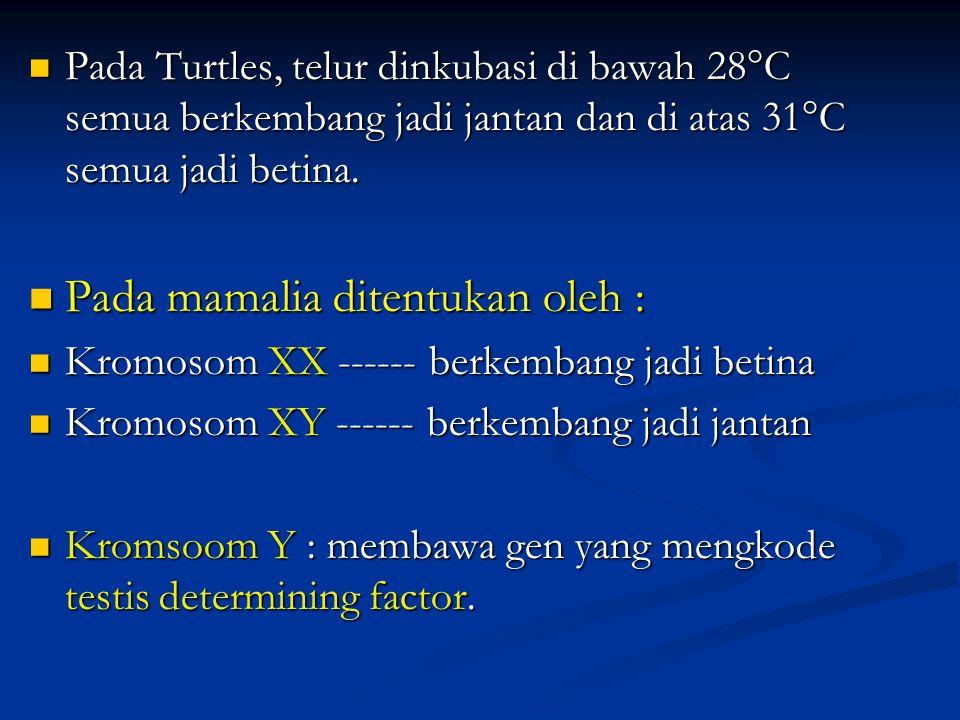 Pada mamalia ditentukan oleh :