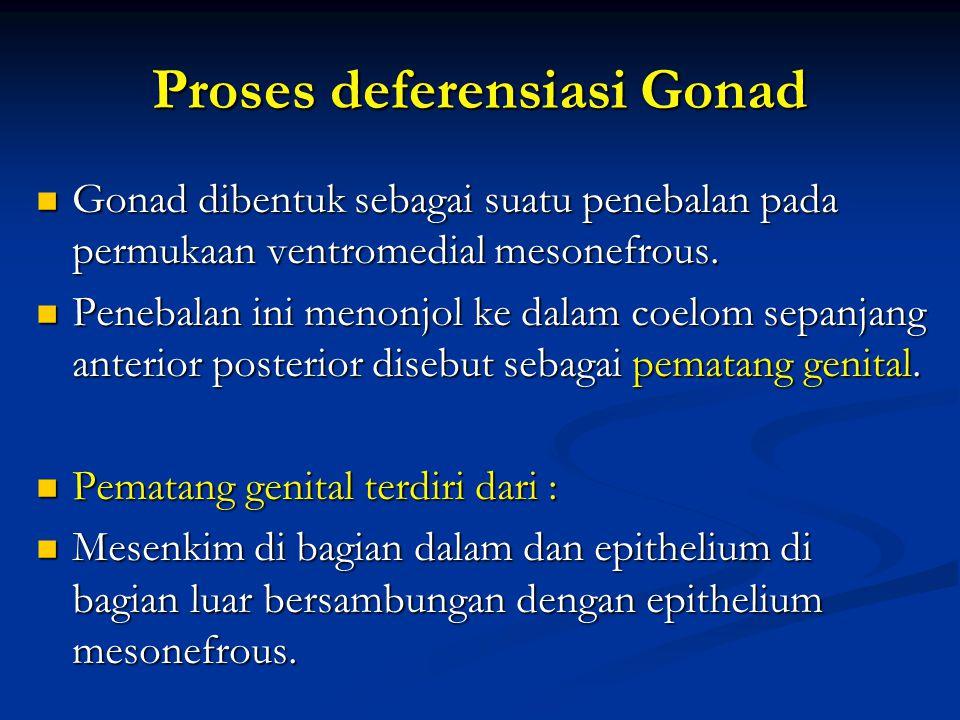 Proses deferensiasi Gonad