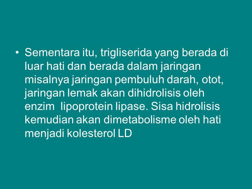 Sementara itu, trigliserida yang berada di luar hati dan berada dalam jaringan misalnya jaringan pembuluh darah, otot, jaringan lemak akan dihidrolisis oleh enzim lipoprotein lipase.