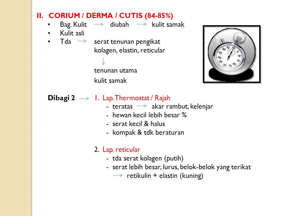 II. CORIUM / DERMA / CUTIS (84-85%)