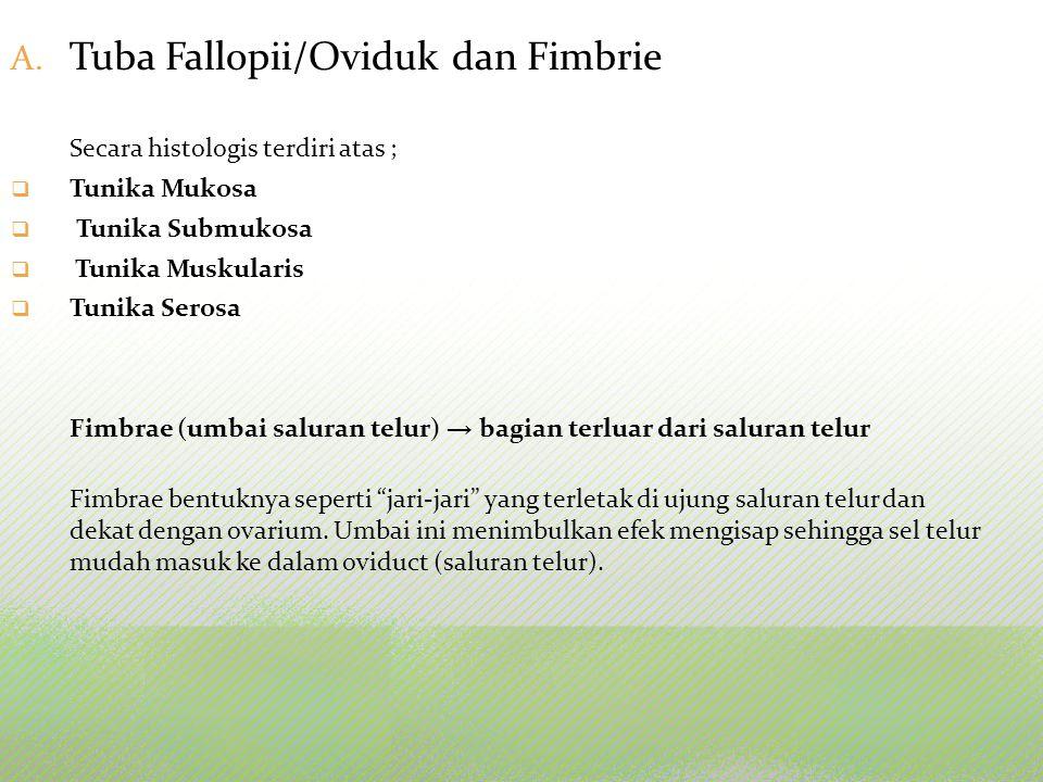 Tuba Fallopii/Oviduk dan Fimbrie