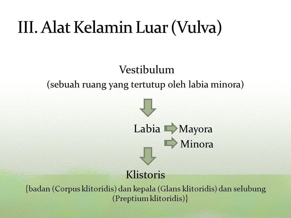 III. Alat Kelamin Luar (Vulva)