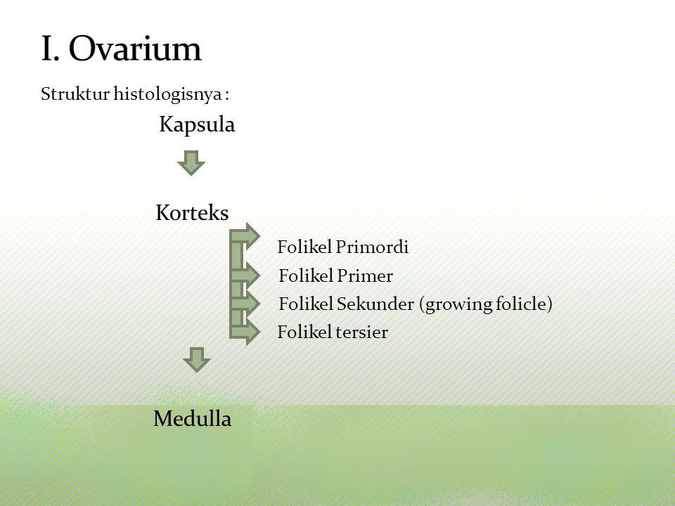 I. Ovarium Kapsula Folikel Primordi Medulla Struktur histologisnya :