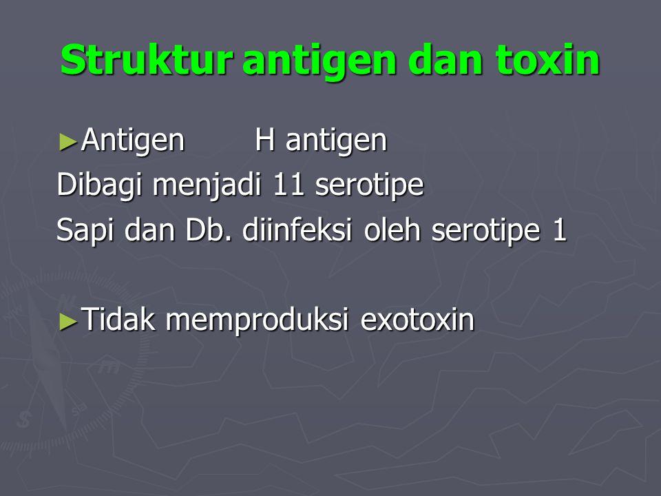 Struktur antigen dan toxin