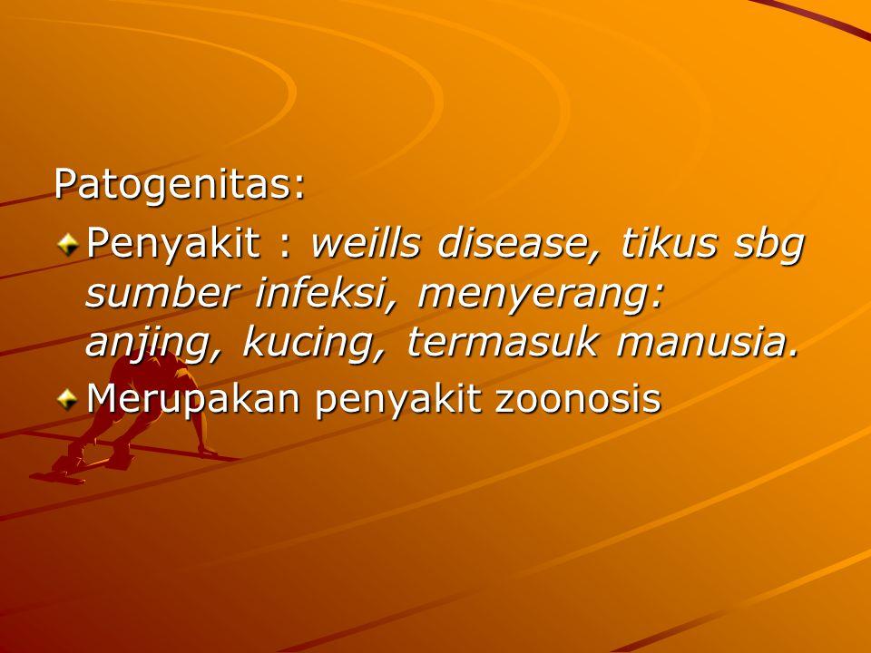 Patogenitas: Penyakit : weills disease, tikus sbg sumber infeksi, menyerang: anjing, kucing, termasuk manusia.