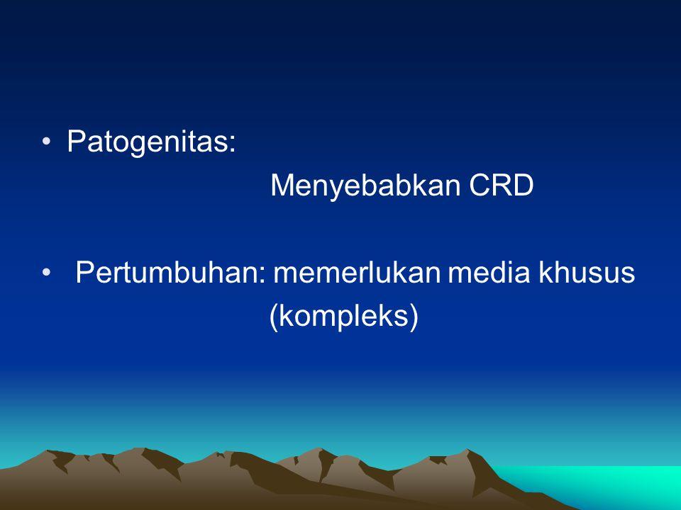 Patogenitas: Menyebabkan CRD Pertumbuhan: memerlukan media khusus (kompleks)