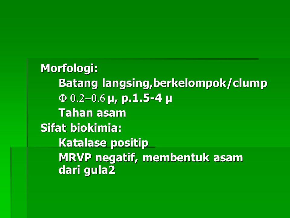 Morfologi: Batang langsing,berkelompok/clump. F 0.2-0.6 µ, p.1.5-4 µ. Tahan asam. Sifat biokimia: