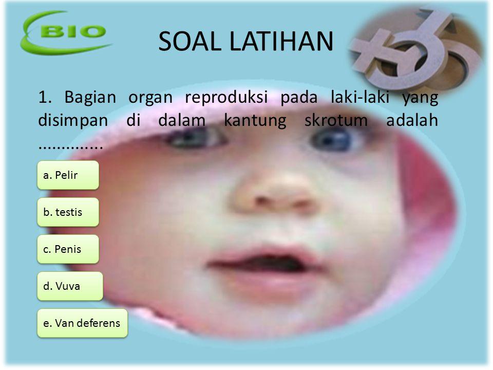 SOAL LATIHAN 1. Bagian organ reproduksi pada laki-laki yang disimpan di dalam kantung skrotum adalah ..............