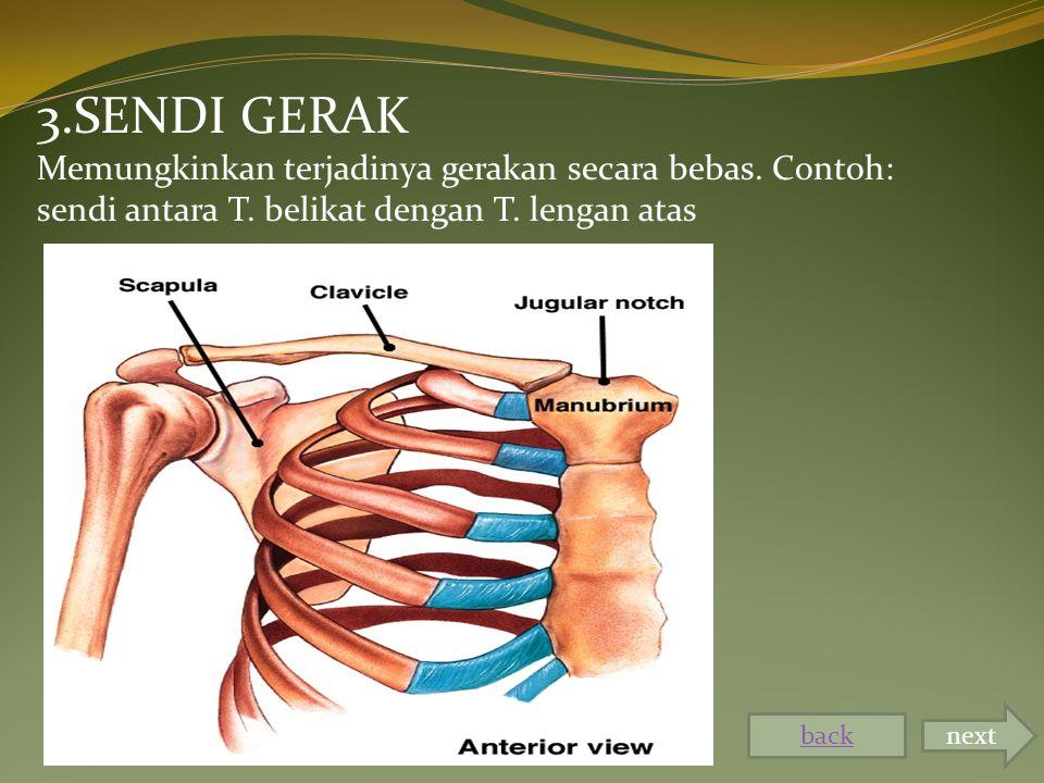 3.SENDI GERAK Memungkinkan terjadinya gerakan secara bebas. Contoh: sendi antara T. belikat dengan T. lengan atas.