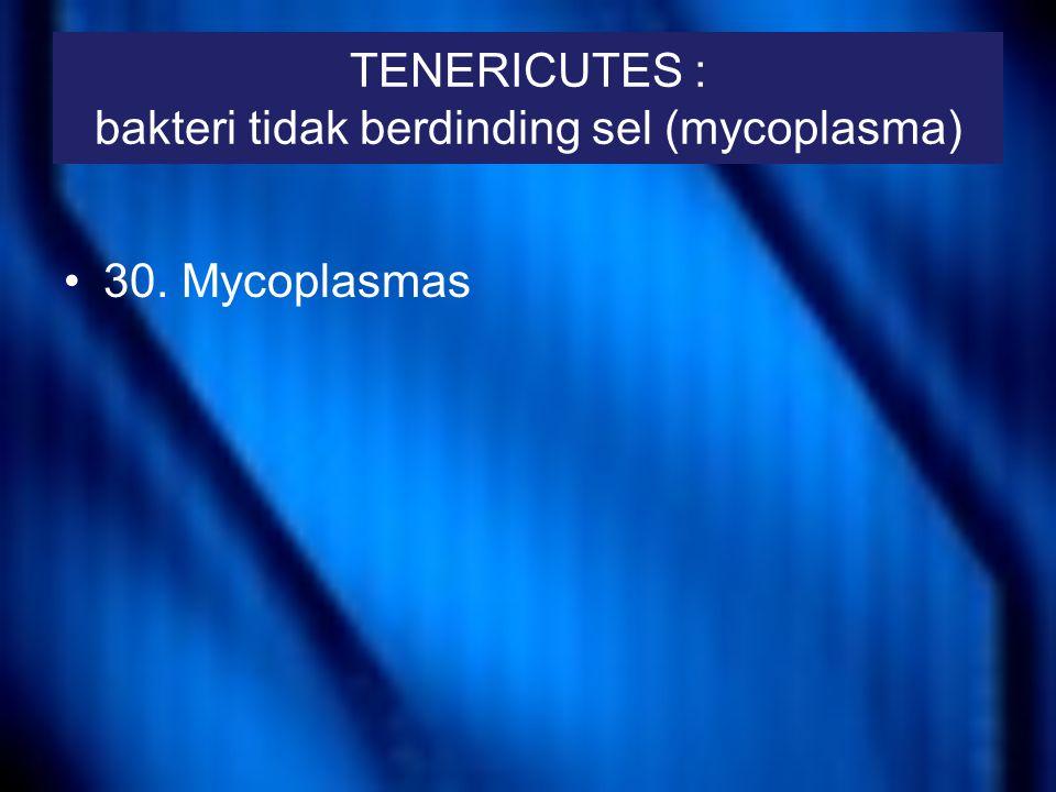 TENERICUTES : bakteri tidak berdinding sel (mycoplasma)