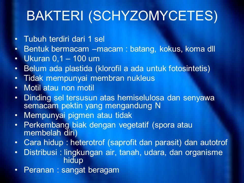 BAKTERI (SCHYZOMYCETES)