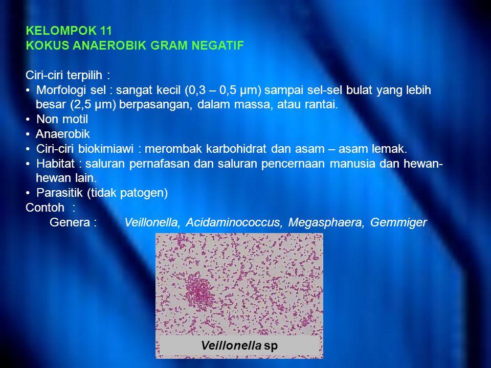 KELOMPOK 11 KOKUS ANAEROBIK GRAM NEGATIF. Ciri-ciri terpilih : Morfologi sel : sangat kecil (0,3 – 0,5 μm) sampai sel-sel bulat yang lebih.