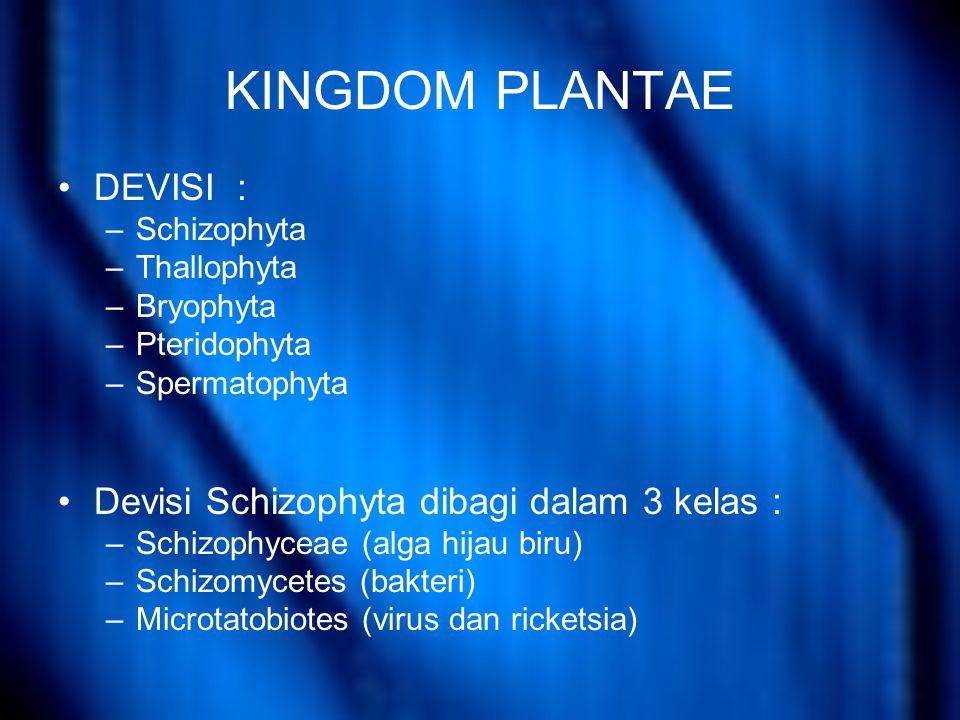 KINGDOM PLANTAE DEVISI : Devisi Schizophyta dibagi dalam 3 kelas :