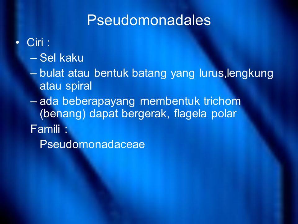 Pseudomonadales Ciri : Sel kaku