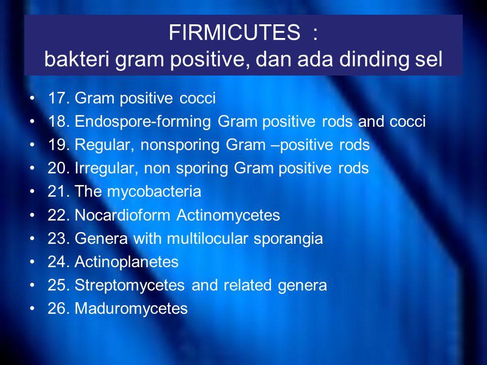 FIRMICUTES : bakteri gram positive, dan ada dinding sel