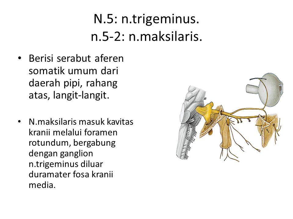 N.5: n.trigeminus. n.5-2: n.maksilaris.