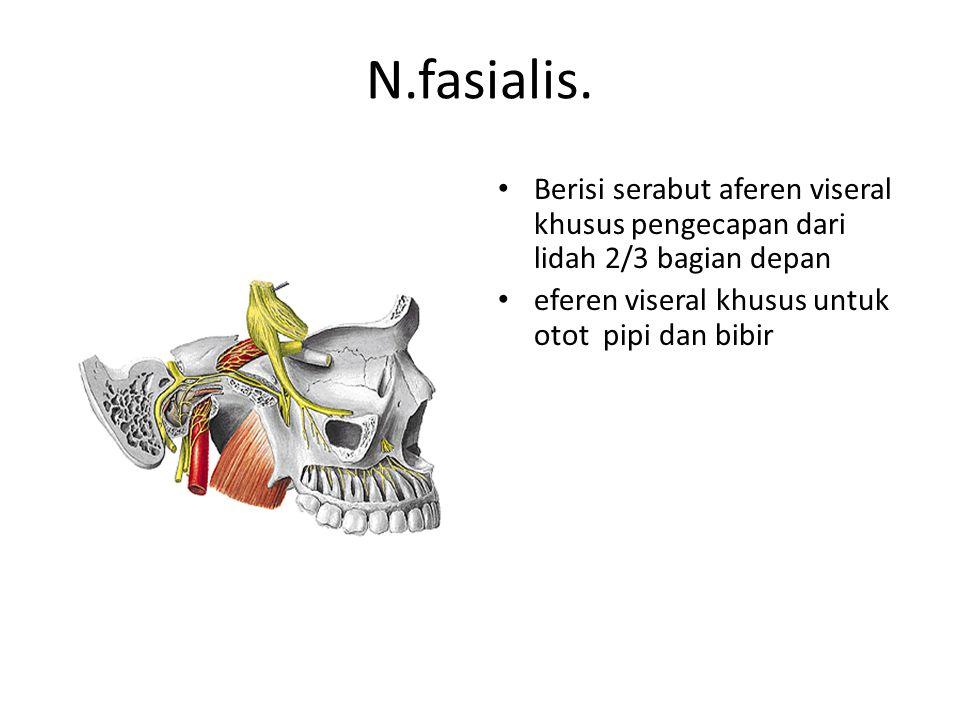N.fasialis. Berisi serabut aferen viseral khusus pengecapan dari lidah 2/3 bagian depan.