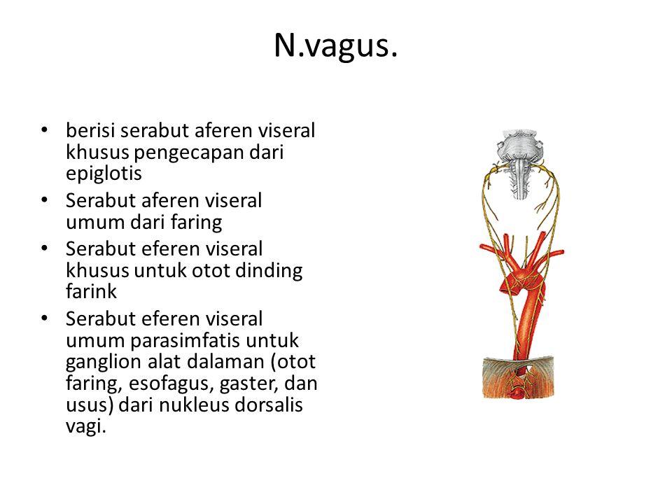 N.vagus. berisi serabut aferen viseral khusus pengecapan dari epiglotis. Serabut aferen viseral umum dari faring.