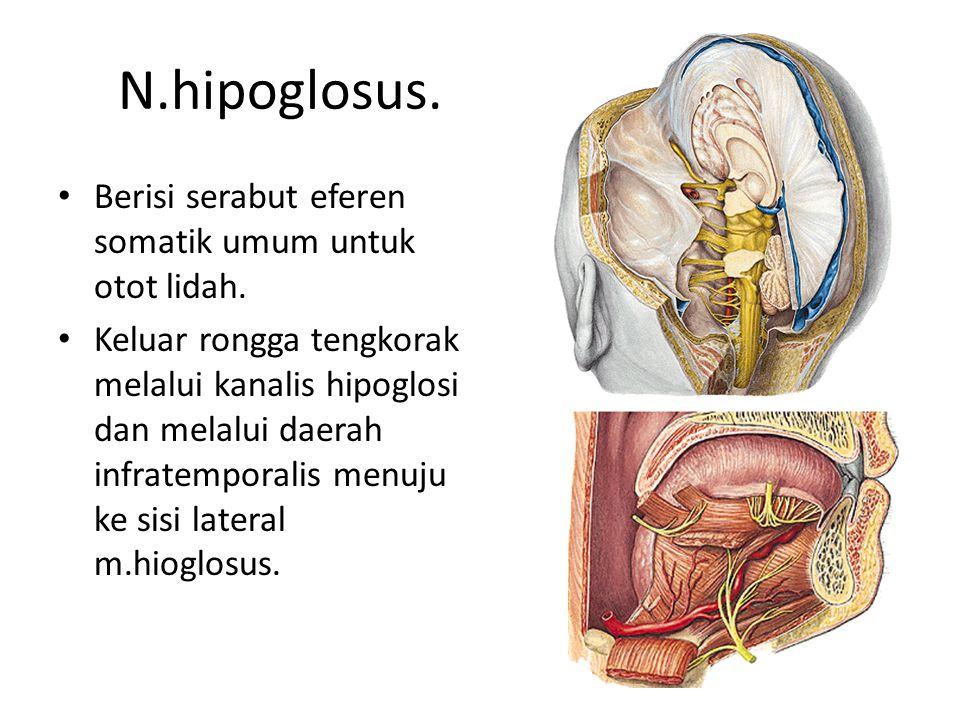 N.hipoglosus. Berisi serabut eferen somatik umum untuk otot lidah.