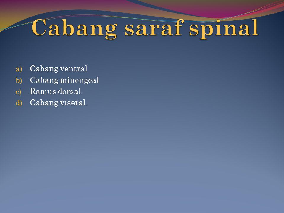 Cabang ventral Cabang minengeal Ramus dorsal Cabang viseral