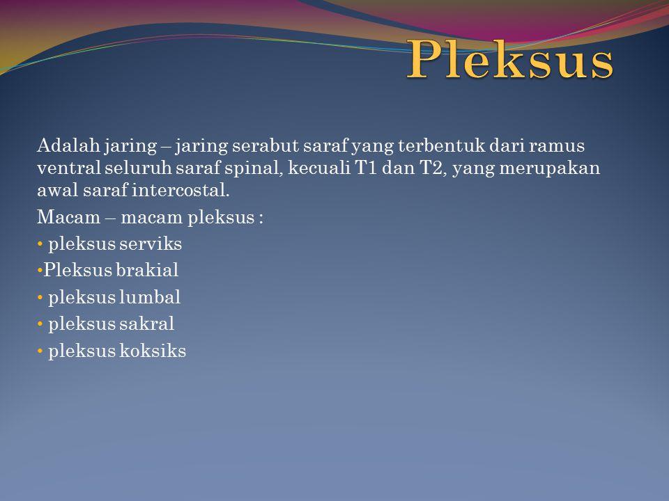 Pleksus