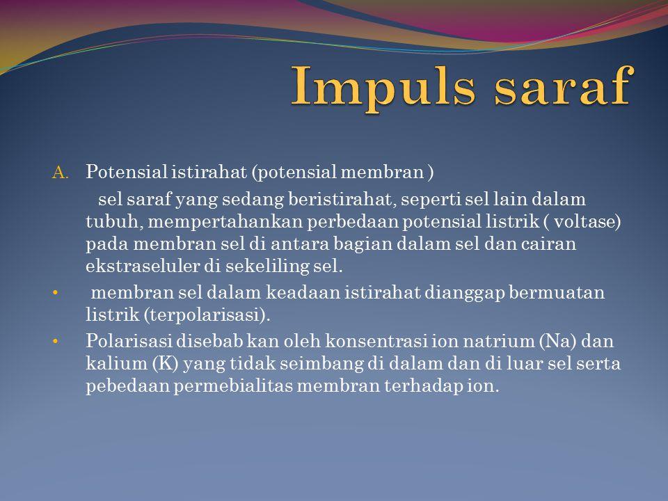 Impuls saraf Potensial istirahat (potensial membran )