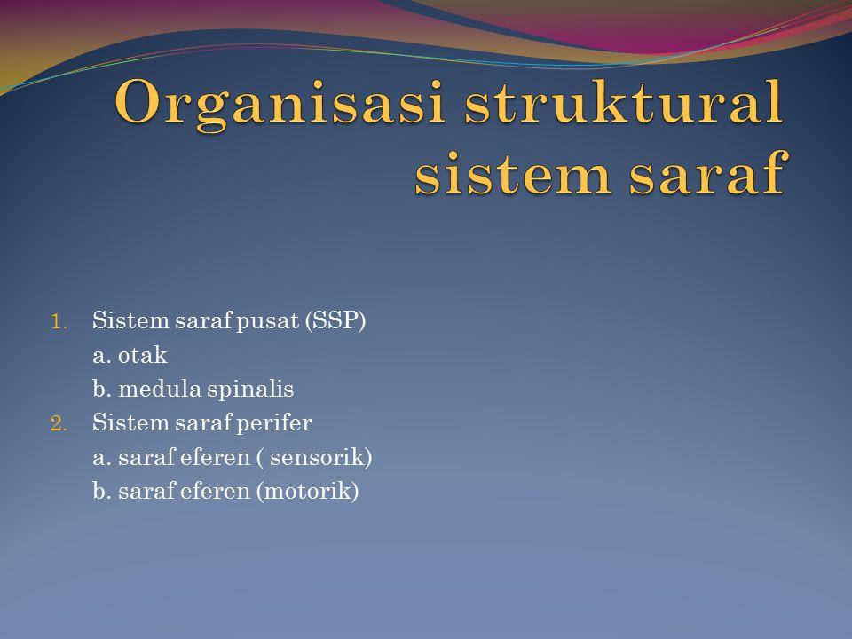 Organisasi struktural sistem saraf