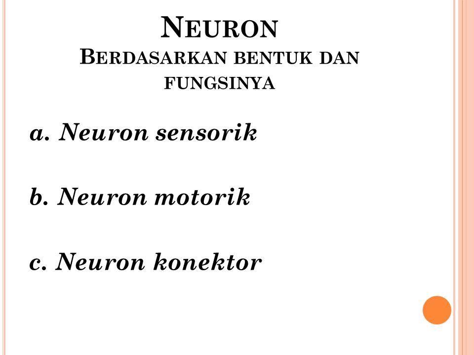 Neuron Berdasarkan bentuk dan fungsinya