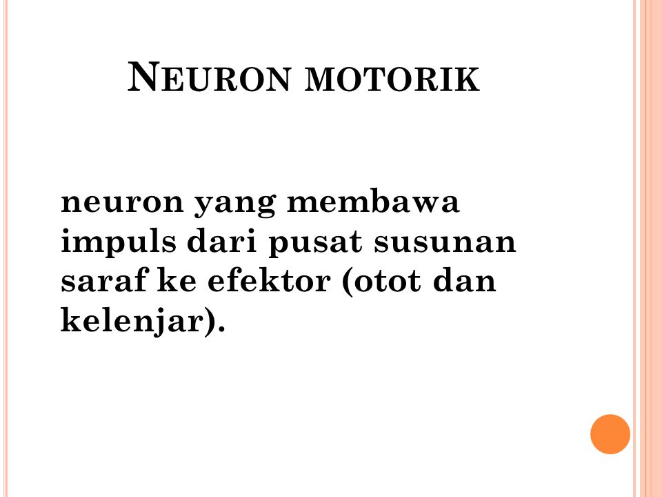 Neuron motorik neuron yang membawa impuls dari pusat susunan saraf ke efektor (otot dan kelenjar).
