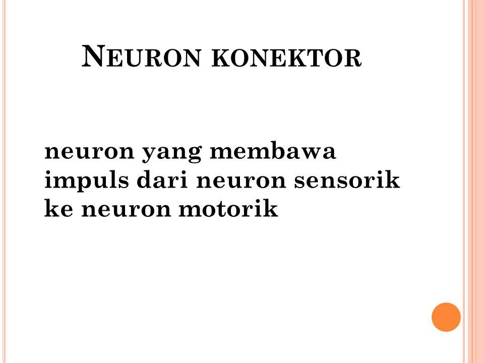 Neuron konektor neuron yang membawa impuls dari neuron sensorik ke neuron motorik