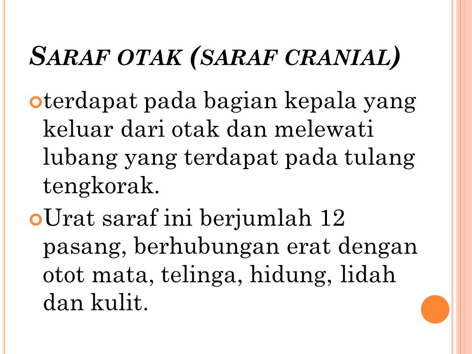 Saraf otak (saraf cranial)