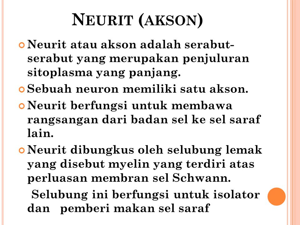 Neurit (akson) Neurit atau akson adalah serabut- serabut yang merupakan penjuluran sitoplasma yang panjang.
