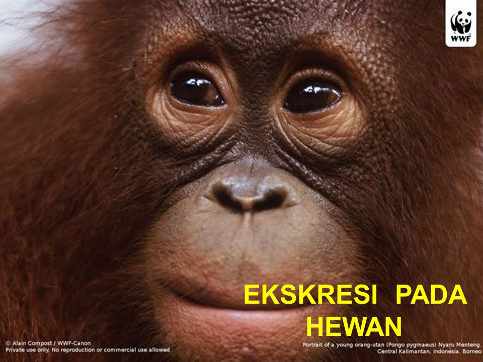 EKSKRESI PADA HEWAN