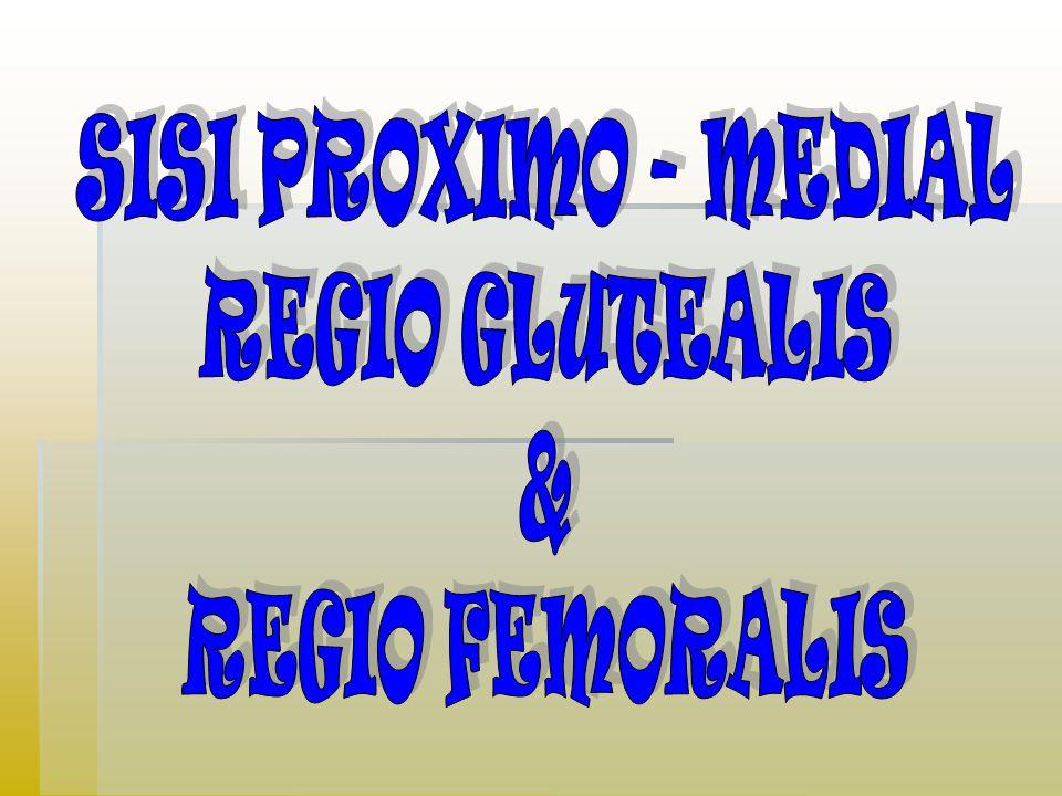 SISI PROXIMO - MEDIAL REGIO GLUTEALIS & REGIO FEMORALIS