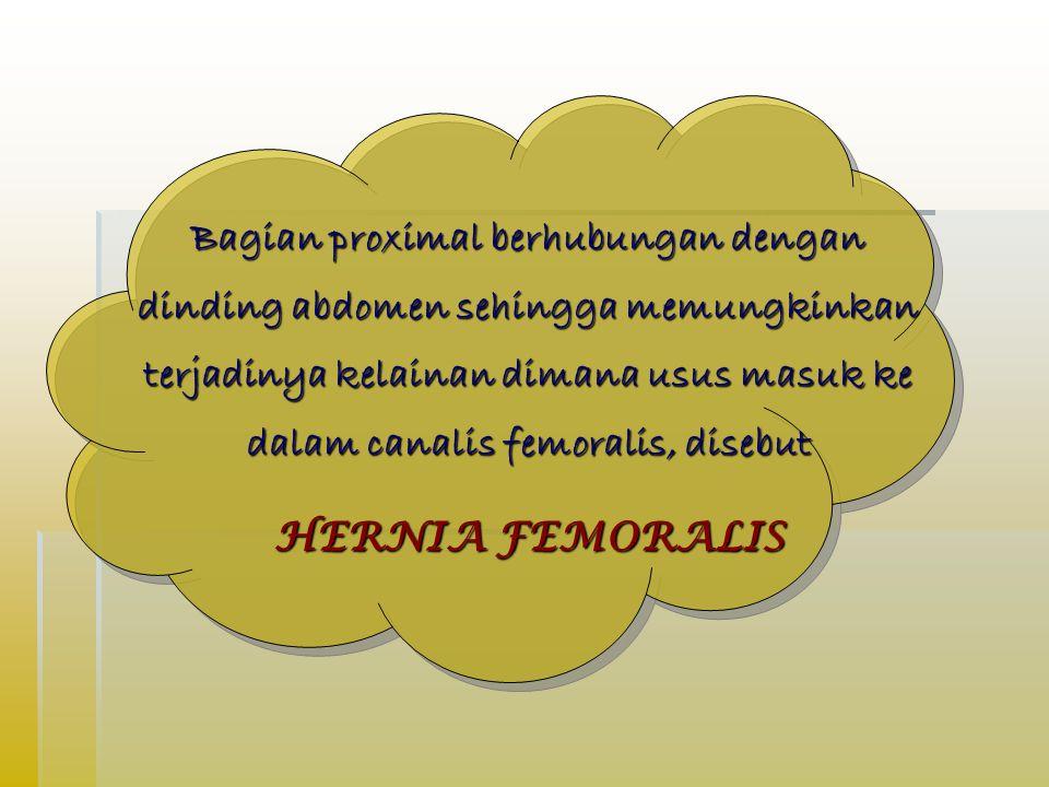 Bagian proximal berhubungan dengan dinding abdomen sehingga memungkinkan terjadinya kelainan dimana usus masuk ke dalam canalis femoralis, disebut