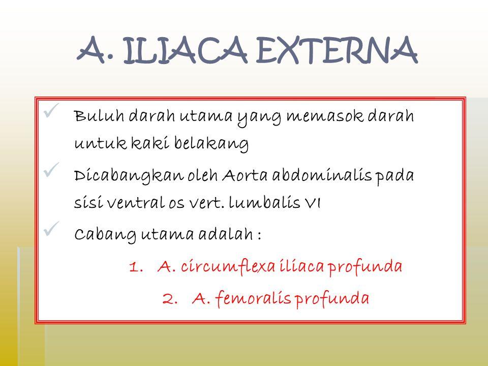 1. A. circumflexa iliaca profunda