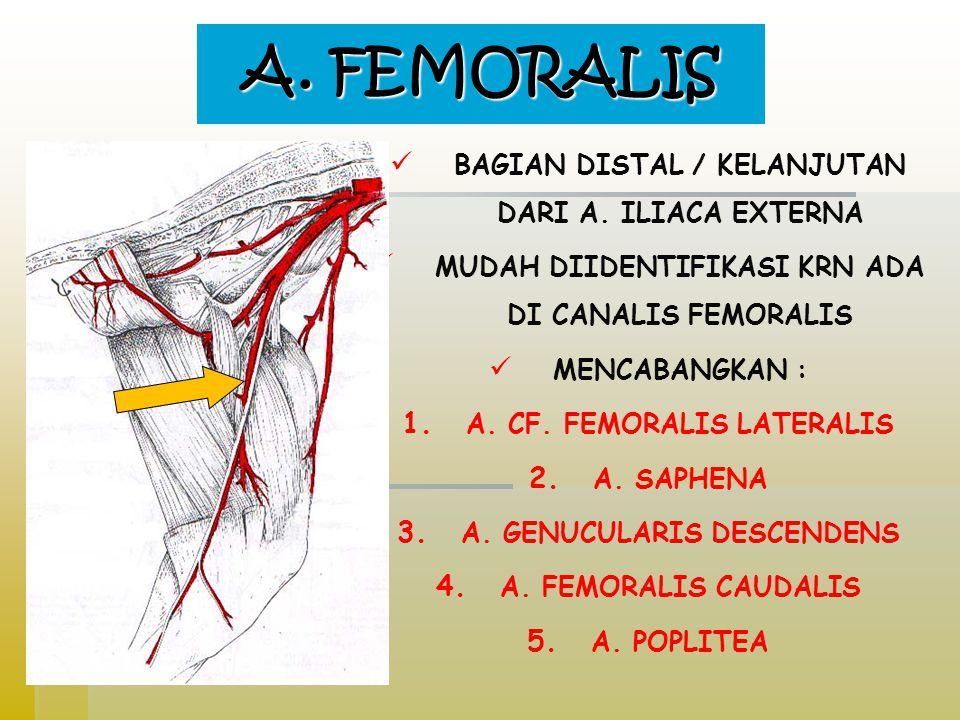 A. FEMORALIS BAGIAN DISTAL / KELANJUTAN DARI A. ILIACA EXTERNA