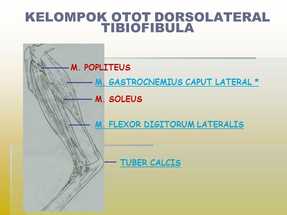 KELOMPOK OTOT DORSOLATERAL TIBIOFIBULA